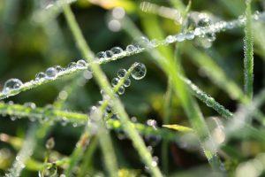 druppels aan grassprieten