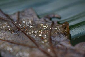 druppel blad macrofotografie