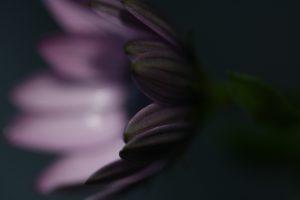 macrofotografie paarse bloemblaadjes